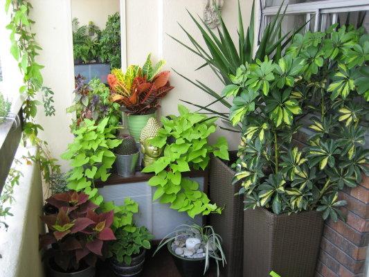 Home Garden Design Ideas India: Balcony Garden For Small Area